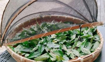 大自然の癒しOrganic香水と美容水、決算セール!